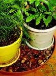 houseplant_health_1